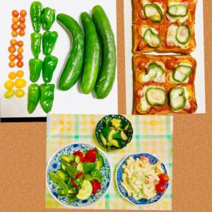【今日の】ミニトマト、ピーマン、キュウリ【収穫】