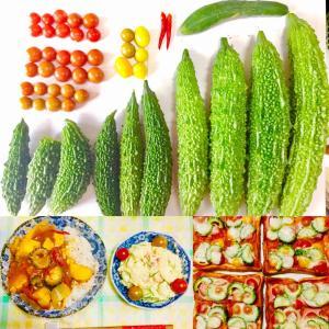 【今日の】ゴーヤ、ミニトマト、ミニキュウリ【収穫】