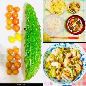 【今日の】ゴーヤ、ミニトマト【収穫】