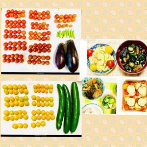 【今日の】ミニトマト180個、キュウリ、インゲン、ナス【収穫】