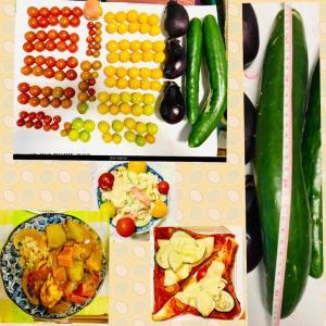 【今日の】ミニトマト、トマト、ナス、キュウリ【収穫】