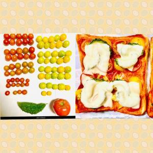 【今日の】ミニトマト、トマト、ゴーヤ【収穫】