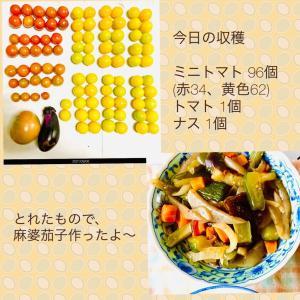 【今日の】ミニトマト96個、トマト、ナス【収穫】
