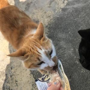 黒猫クーちゃんの プチ家出。