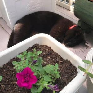 花苗の植え付け・・ あ~ 忙しい。