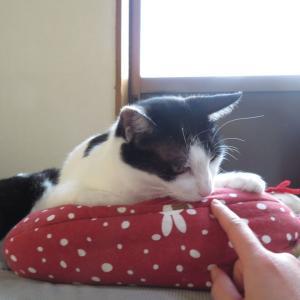 大分旅☆全国の宿・看板猫ランキング1位の猫がいる【新玉(あらたま)旅館】ふみふみ動画付き