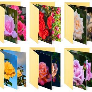 秋の薔薇園 。パープル色のファイルを開いて。。