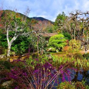 京都大原 実光院の秋の境内 。。。
