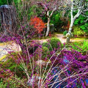 京都大原 実光院の紫式部 。。。