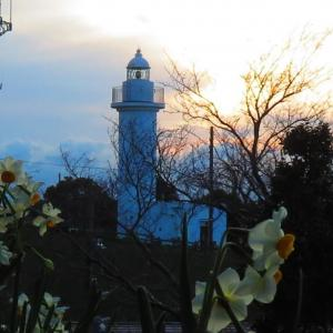 越前岬灯台と水仙。。。