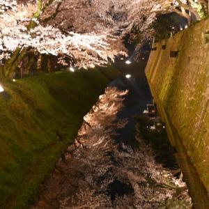 金沢城のお堀 満開の夜桜。。。