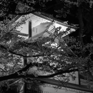 金沢城 満開の夜桜。。。