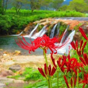 秋の景色 また楽しめる十二滝の彼岸花。。。