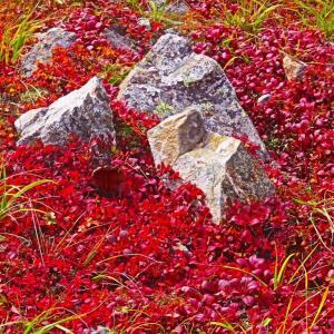 白馬三山縦走 登山路の紅葉 。。。