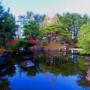 わが町 冬支度雪吊りの芦城公園。。。