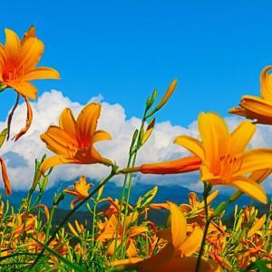 石川県緊急事態宣言解除で 白山高山植物園オープン。。。