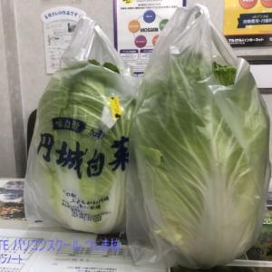 ド迫力の円城白菜