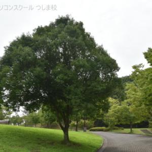 大きな木の下で・・・