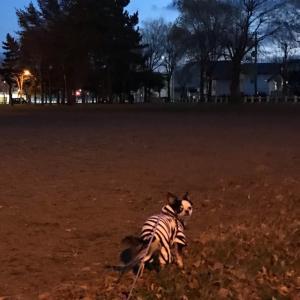 2020/11/24 きらり夜散歩
