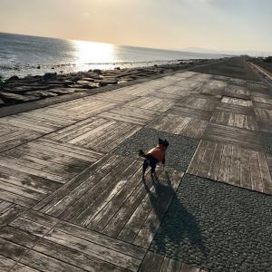 2021/1/25 久しぶりに翔太と海散歩