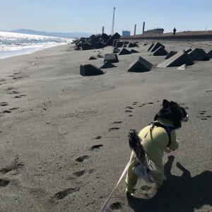 2021/4/11きらり 再び砂浜海岸へ