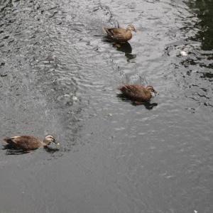 カメラの日、最近撮ったお気に入りの写真、見せて!↗TOEIC 公式問題集7もでるし、これ、鴨。