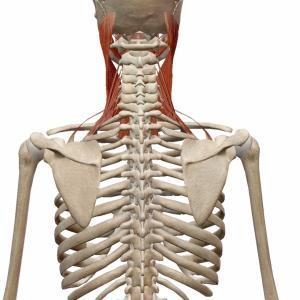 開脚は股関節の筋肉をストレッチするしかない?いや道はまだある!
