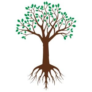 根を伸ばす時期