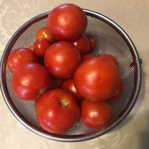 蔓ボケから回復してトマト初収穫です。