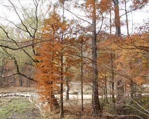 神戸市立森林植物園に行きました