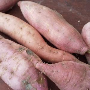 さつま芋掘りワークショップのお知らせ 2019 in こずえ農園