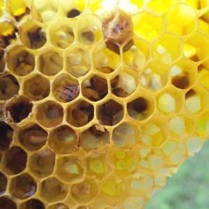 【養蜂だより】そして誰もいなくなった