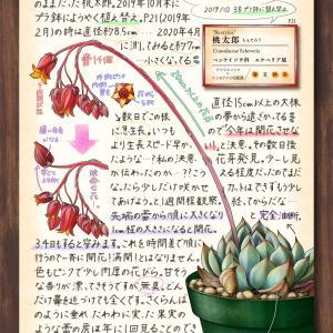 多肉植物スケッチ帖 page27