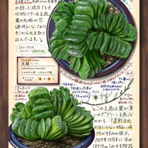 多肉植物スケッチ帖 page28