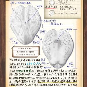 「chicu.雑記帖」楽天市場Parejaさんにて12月号掲載中