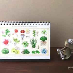 新商品:2020年 多肉植物 卓上カレンダー