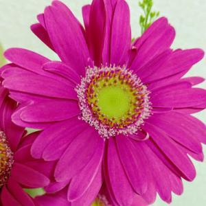 花も団子も。花のある生活