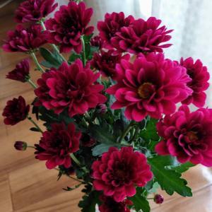 臆病者のミニマリストデビューへの道ーごみを小さく、花に感謝をー