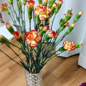 今日の花とつのる不信感