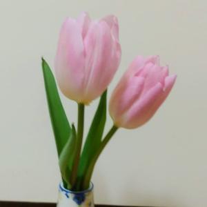 ブラジャーから黒い汁&今日の花