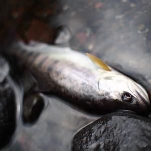 高活性の釣り