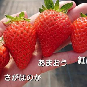 dポイント(期間限定)の使い道!