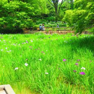 梅雨時の昭和記念公園 ②