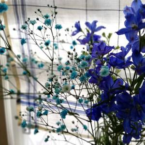 昨日はぽかぽか春を感じて気持ちイイ一日 だった・ブルーの花を買いました