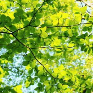 春は防災準備にベストな季節「家中を見直す」物を減らして逃げ道を確保しておこう