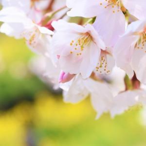 雪が降らない神戸では春を待ち遠しいと思ったことは無かったけれど・・・