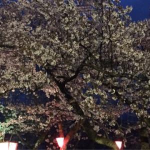 夜桜と体験教室と
