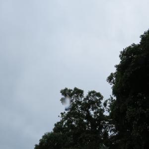 今年の梅雨は長そうね