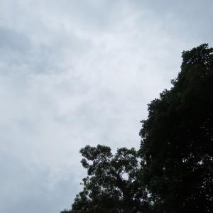 風の中やってもナマズの山。