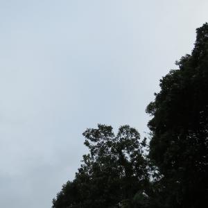 なんだよぉー1日雨じゃん